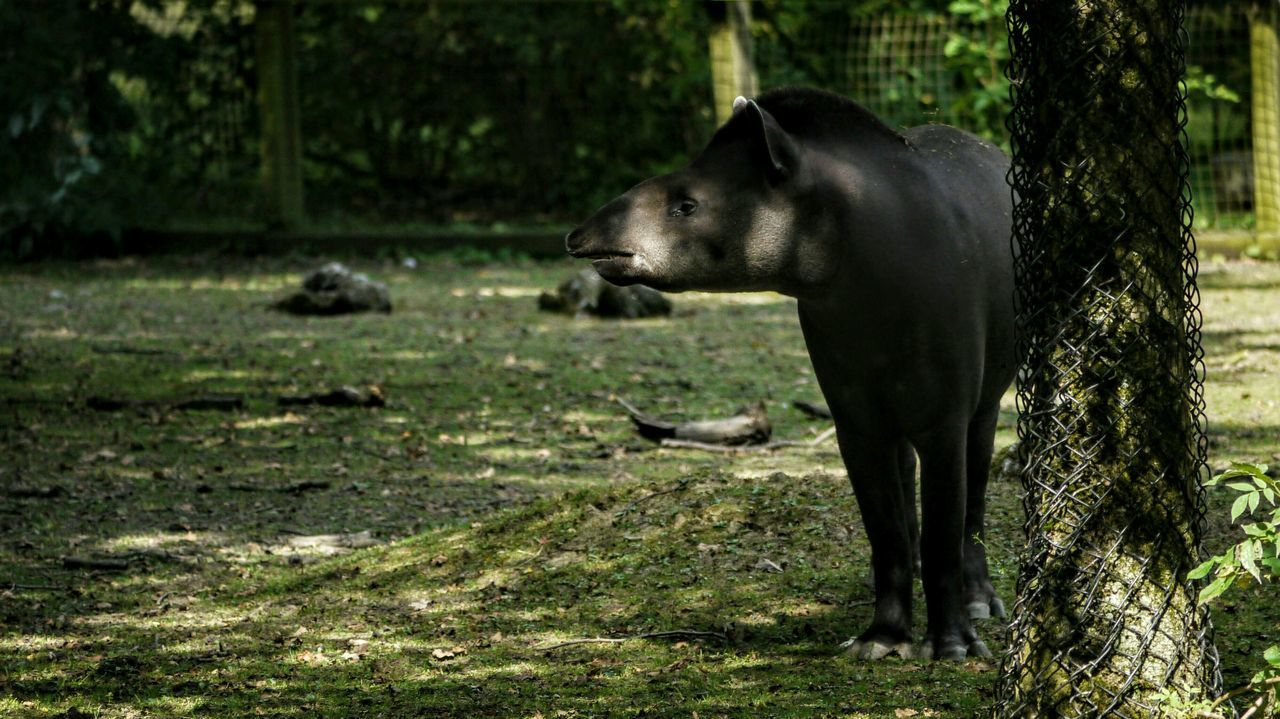 Tapir Zoo Zoo Animals