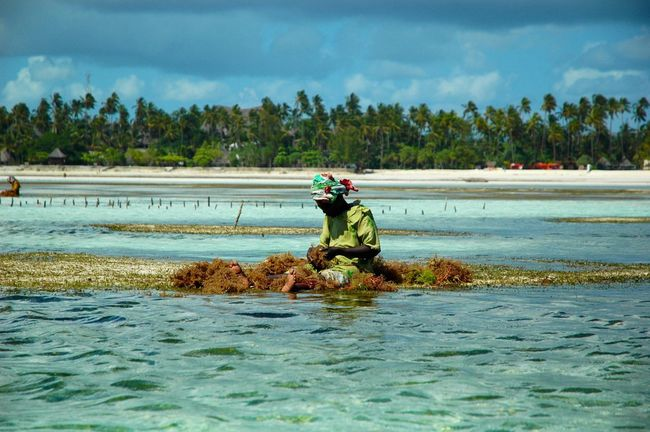 Zanzibar. Woman at work Woman At Work Primo Piano Woman Portrait Portrait Photography Traveling Low Tide Tropical Paradise Holiday Travel Zanzibar Sea Alghe Africa African Beauty Africanwoman African Nature Africa Day To Day