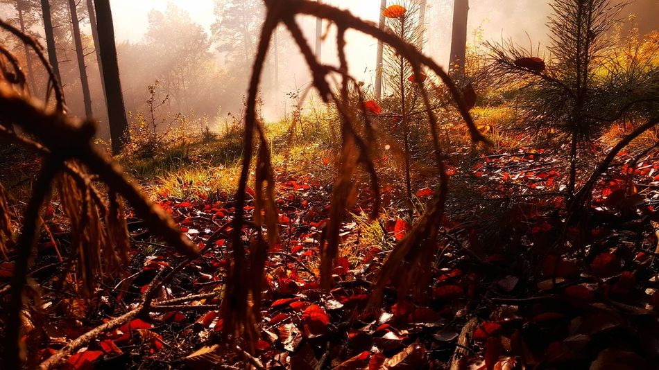 Beauty In Nature Branch Close-up Forest Leaf Morning Nature No People Poland Summer Sunlight Sunrise Tranquility Tree