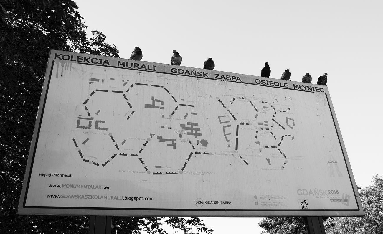 Balck And White Bird Gdansk Murales No People Outdoors Pigeons Pigeonslife Sky Zaspa Nikon Nikon D5200