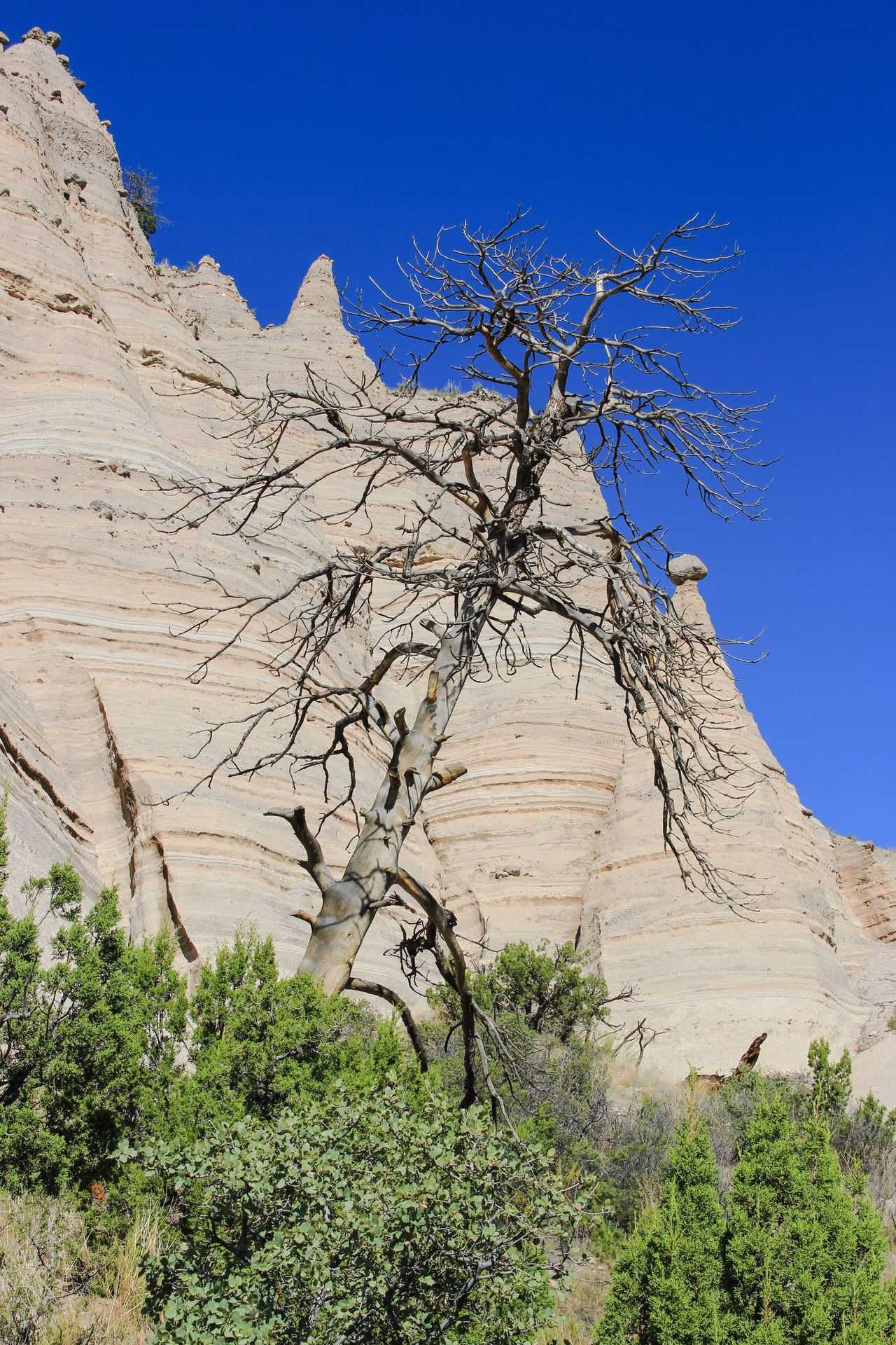 Clear Sky Bare Tree Blue Desert Landscape Tree Branch Arid Climate Tranquil Scene Tranquility Scenics Plant Solitude Nature Physical Geography Beauty In Nature Remote Growth Rock Formation Day Tourism Tourist Non-urban Scene Extreme Terrain Mountain