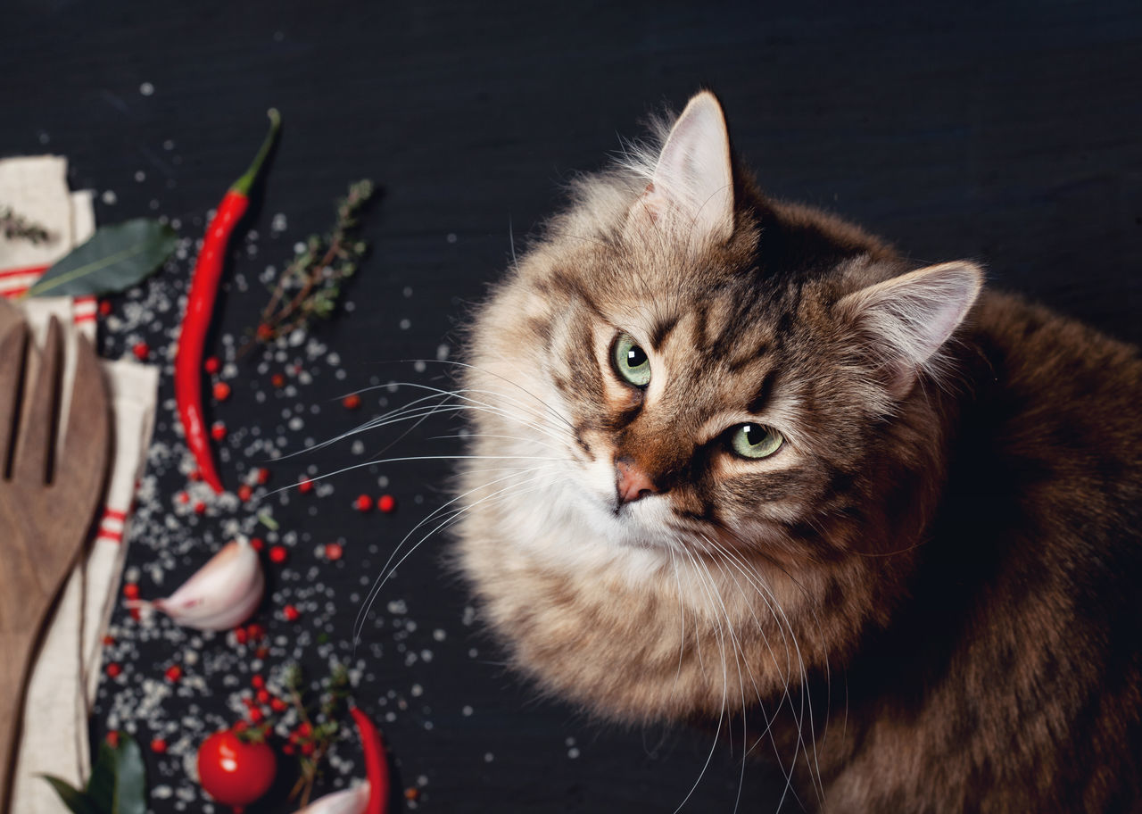 Making mess on the table ;) Animal Themes Close-up Day Domestic Animals Domestic Cat Feline Guilty Indoors  Looking At Camera Mammal Mess No People One Animal Persian Cat  Pets Portrait Whisker