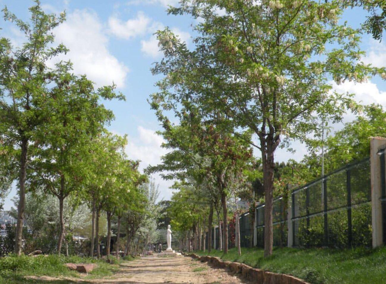 Nature Tree Chemdrawt First Eyeem Photo