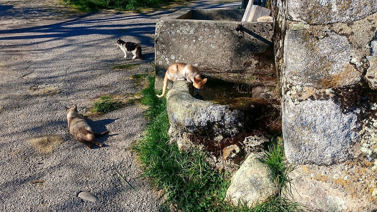 Animal Themes High Angle View Shadow Mammal Sunlight Domestic Animals Pets Animals In The Wild Outdoors No People Day Cats Cats Of EyeEm Village Vilarinho De Negrões Montalegre Portugal Village The Week On EyeEm Pet Portraits