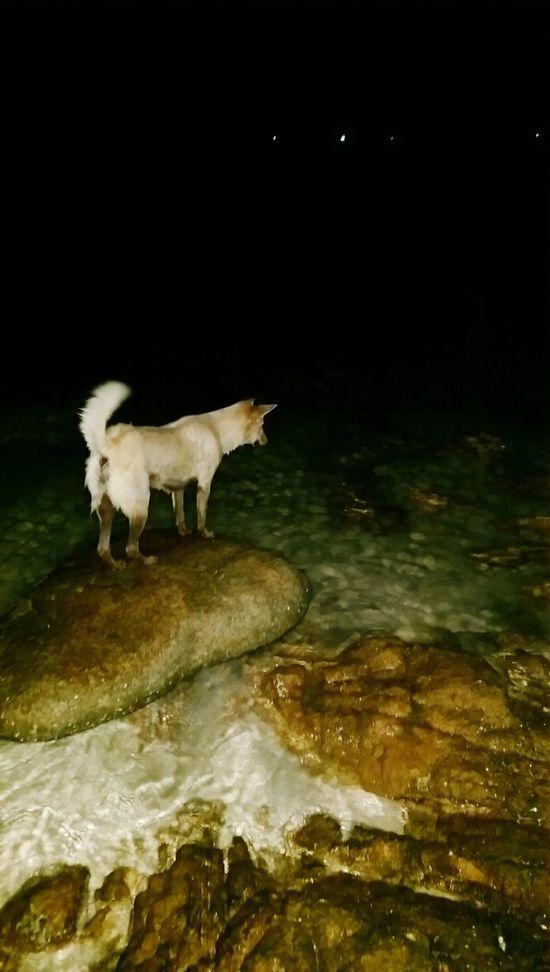 Dog Night Photography Beach Life Beach Walk Streetdogs Meer Chaweng Noi
