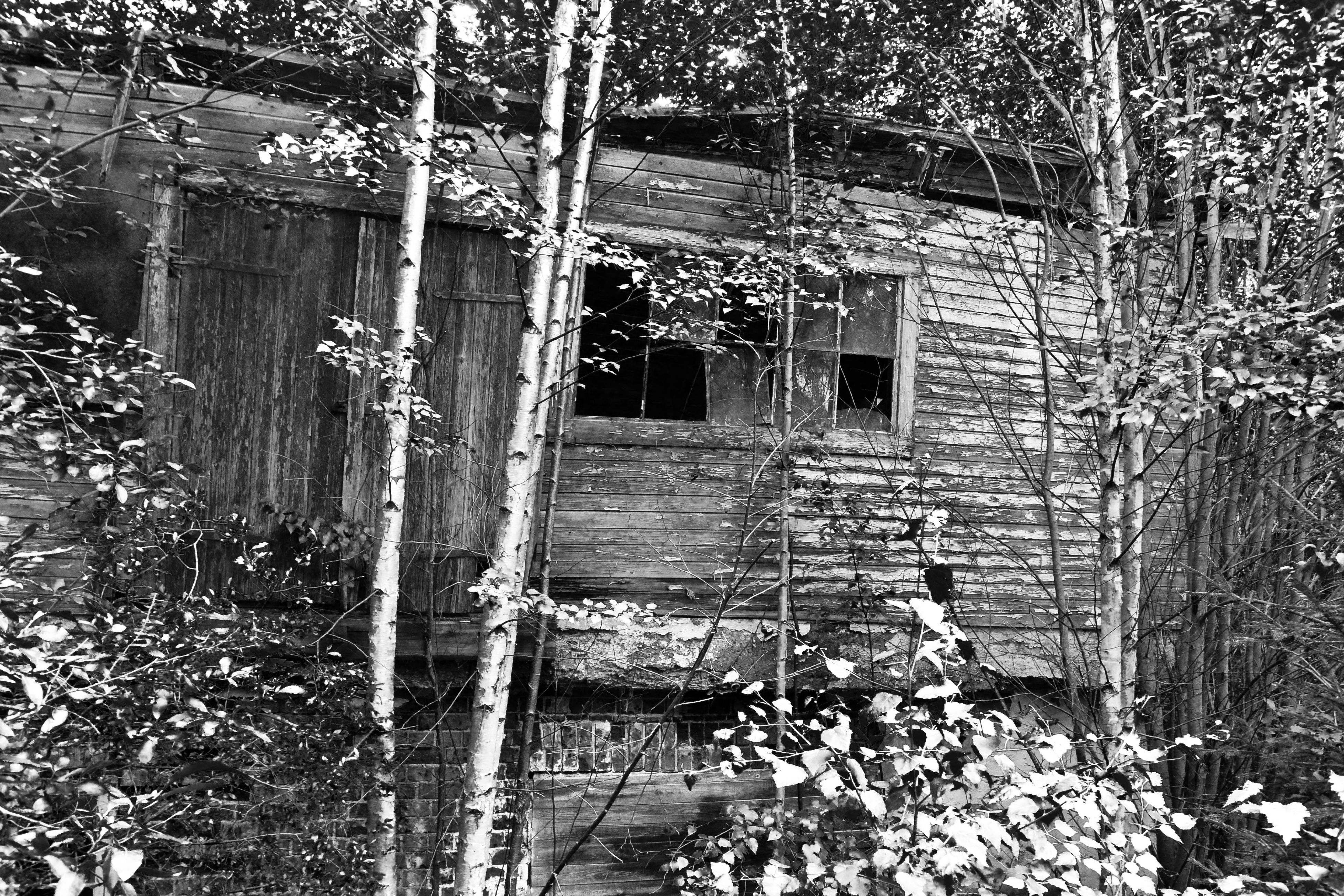 architecture, built structure, building exterior, tree, house, abandoned, old, ivy, damaged, window, obsolete, run-down, wood - material, residential structure, deterioration, growth, brick wall, weathered, building, residential building