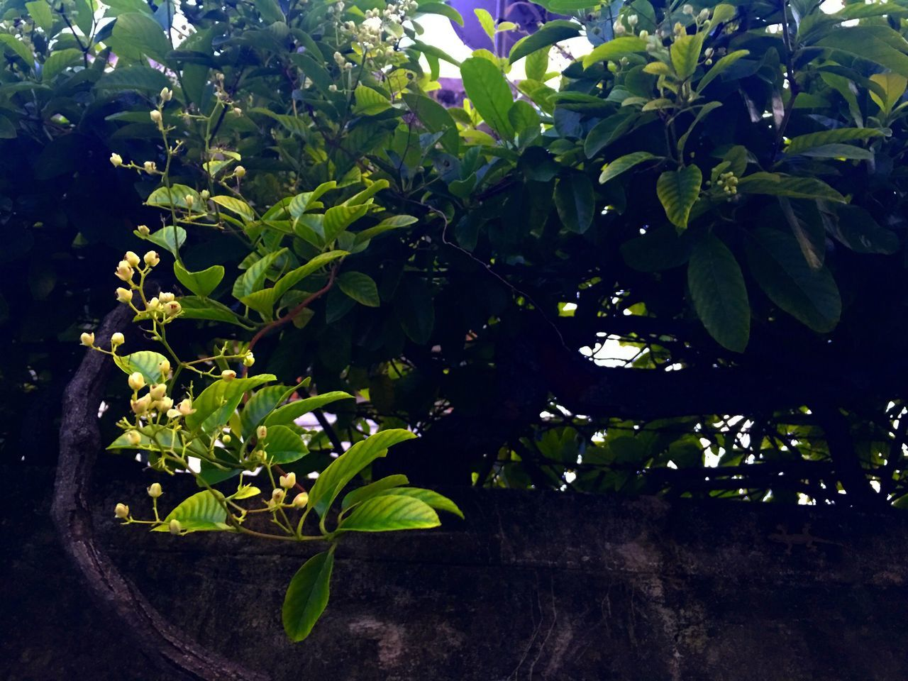 Growth Leaf Nature Plant Beauty In Nature Green Color No People Outdoors Close-up Day Freshness