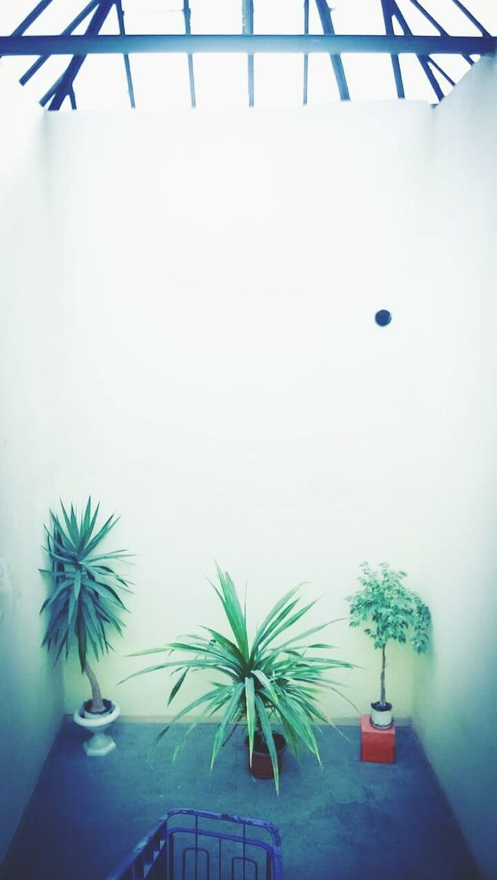 potted plant, indoors, no people, architecture, day