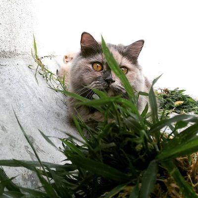 Zoey Mysurumemes Mysore Cats Cat Kitten Beautiful Fashion_ages Hostel Love Mysoreroad Persiancat