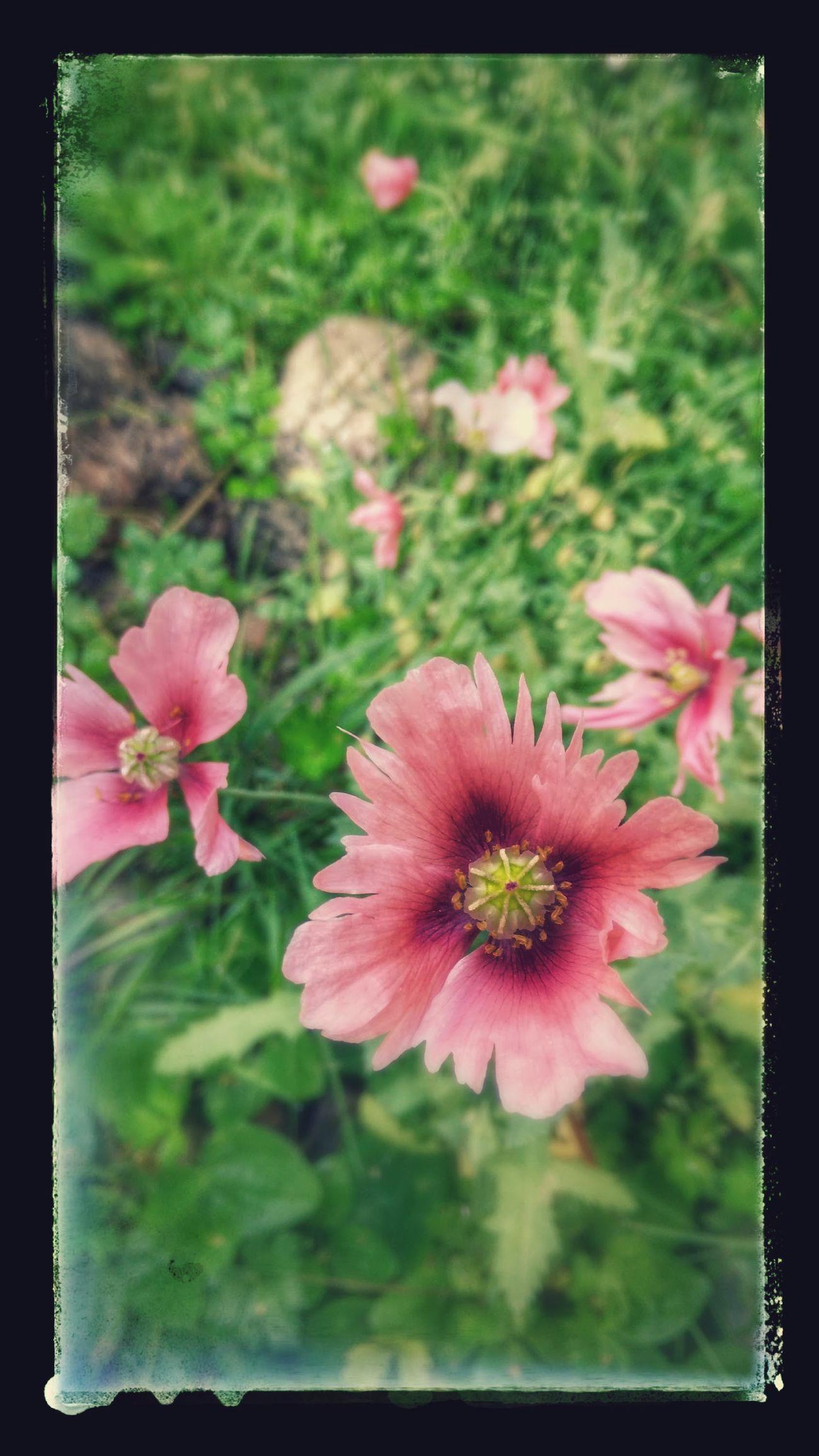 Flower Power🌼