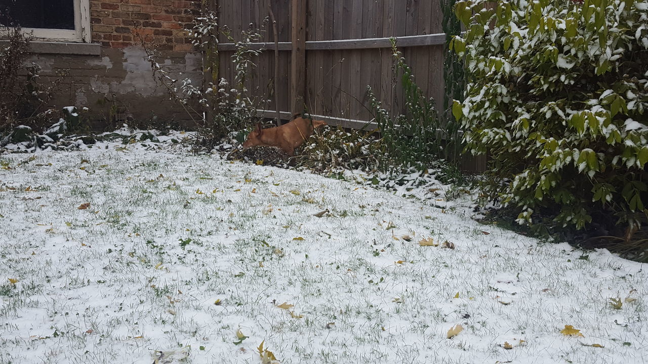 Animal Themes Dog In Backyard Dog In The Snow Dog Peeing First Snowfall No Edit No Filter One Animal Snow Covered