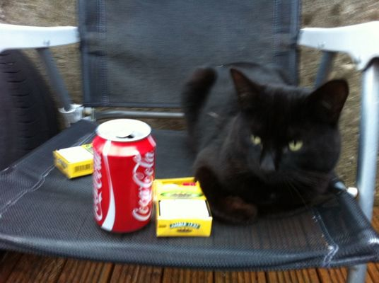 my friend in life at my cat having a good night. :-) by Eddie Mahony