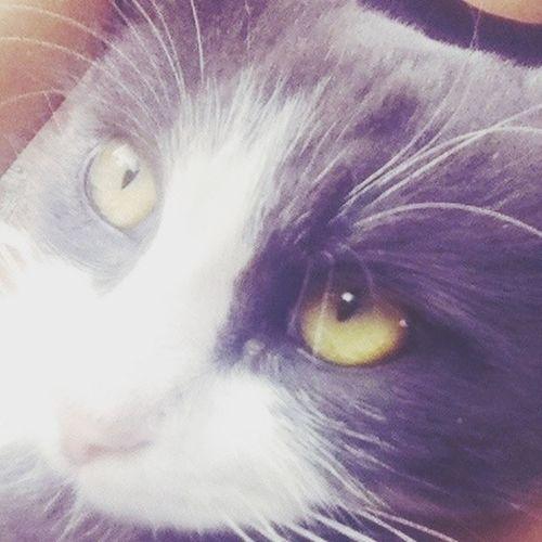 Кошка)