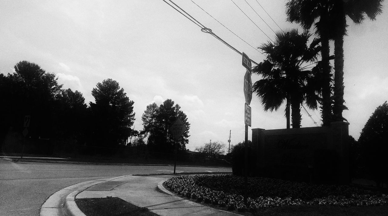 tree, road, transportation, cable, sky, day, no people, outdoors, growth, nature, architecture