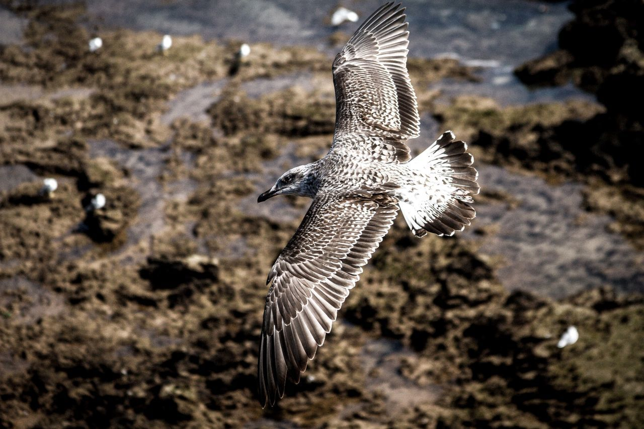 Alertness Animal Animal Photography Animal Themes Animals In The Wild Balance Bird Danger Day Flying Focus On Foreground No People One Animal Selective Focus Side View Softness Spread Wings Travel Photography Two Animals Wildlife Zoology