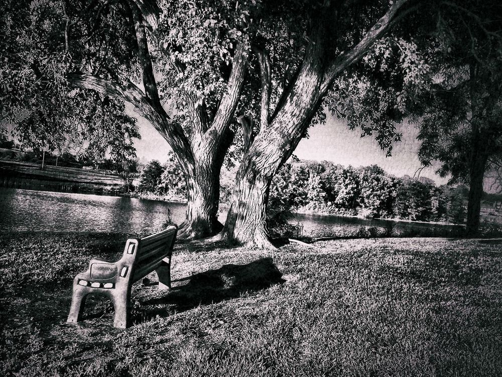 Park Bench Under A Tree By The Lake Tree Trunk Tree Tranquility Shadow Tranquil Scene Growth Nature Branch Solitude Scenics Outdoors No People Beauty In Nature Park Landscape Photography Landscapes Nature Lake September Days Nature Photography Black And White