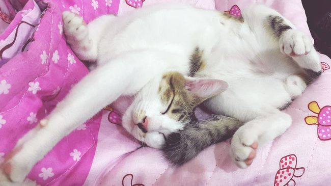 Cute sleeping post... My Pets :) Cat Lovers Cute Pets At Home Lying Down