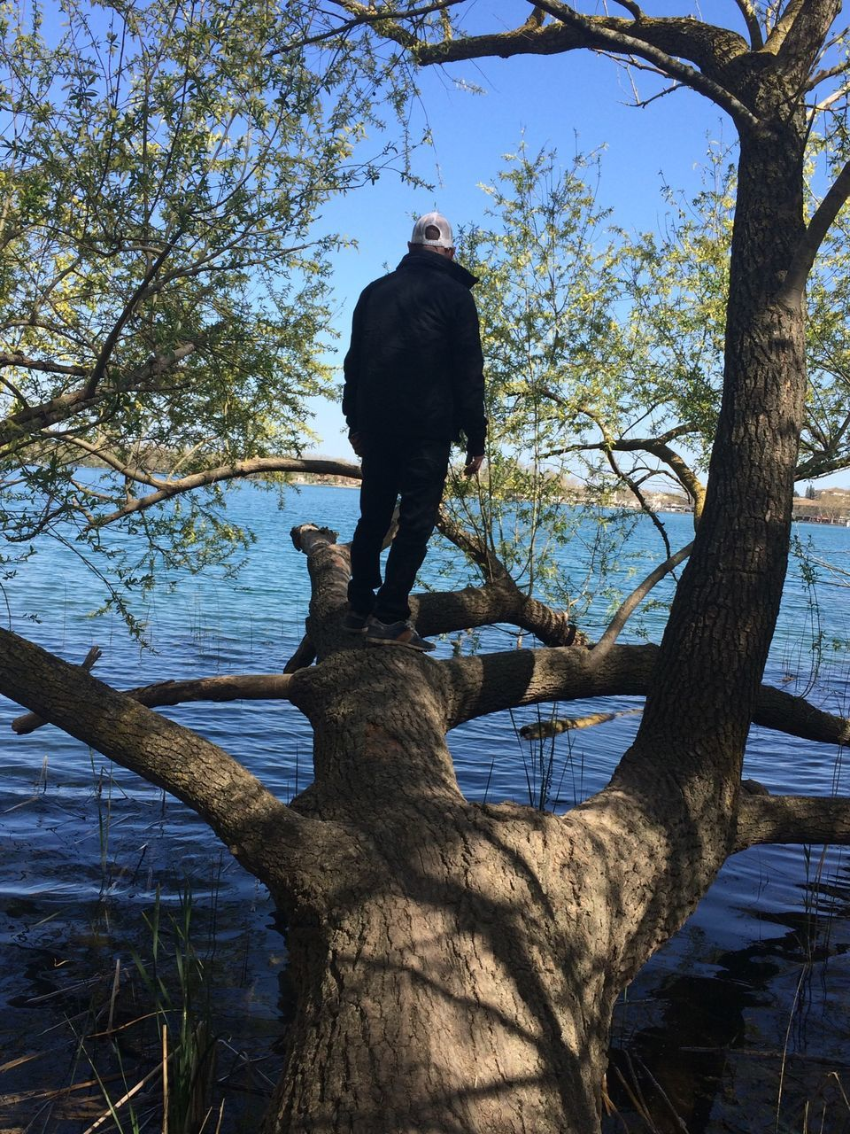 Rear View Of Man Standing On Tree Over Lake