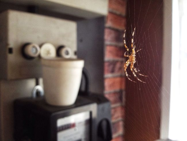 The Magic Mission Spider Spiderweb Spider Web Spiders Spiderman Indoors  Outdoors Home Nature Insect Garden Natur Nature_collection Insects  Insect Photography Beauty In Nature Beautiful Textures And Surfaces Hunting Animals Wild Wildlife Horror Panic