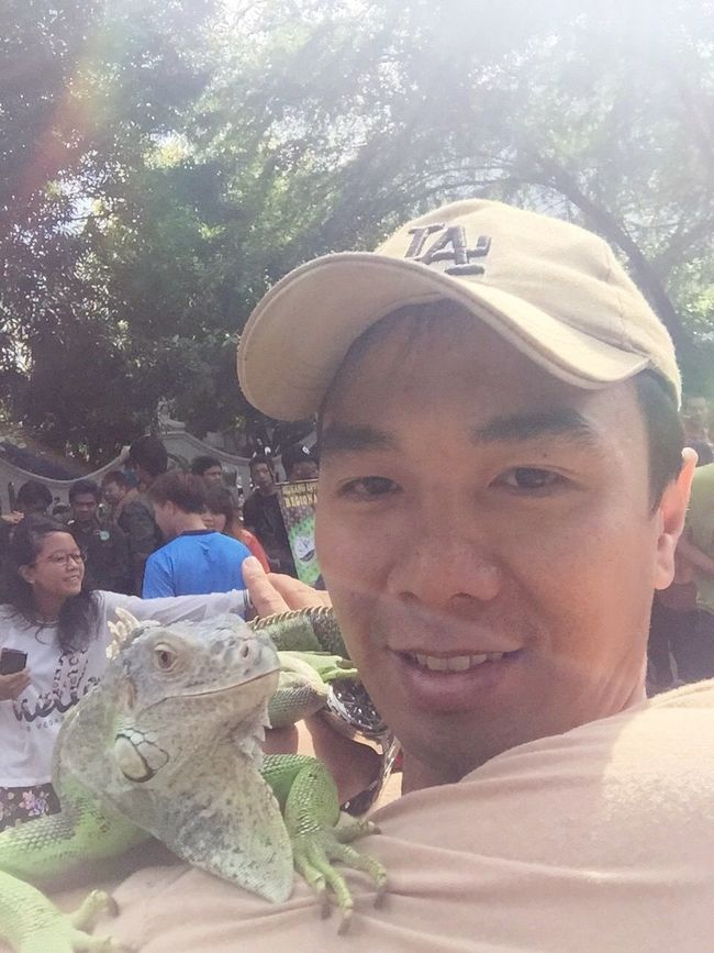 Iguana Cute Pets IPhoneography Iphoneonly Iphone6 Hanging Out Solo City Enjoying The Sun Be Happy Cheese!