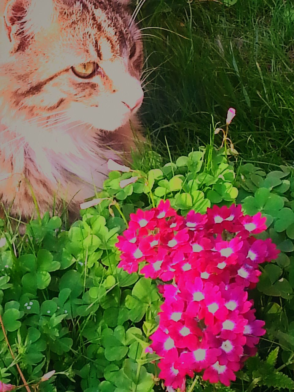flower, leaf, plant, domestic cat, one animal, pink color, petal, nature, growth, fragility, green color, animal themes, beauty in nature, outdoors, no people, flower head, mammal, pets, day, freshness, domestic animals, close-up, feline, blooming