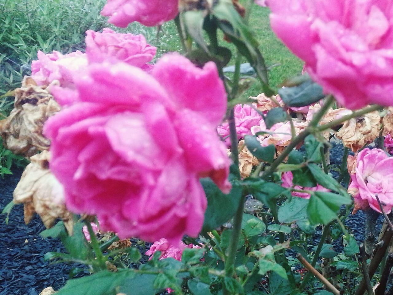 Intothewoods Hallelujah My Lovely  Flowers