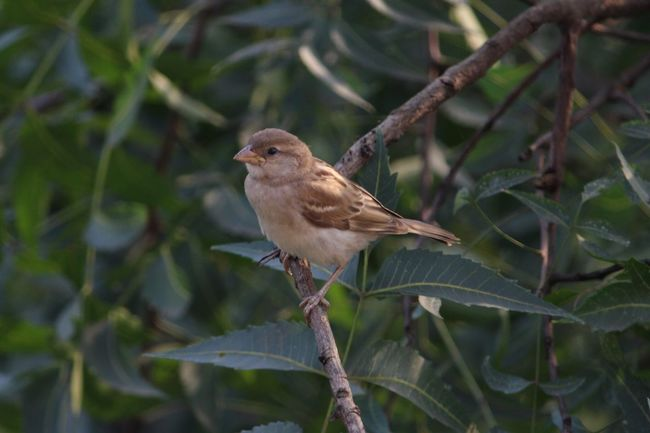 Sparrow Sparrow Bird Citybirds Nature Naturebeauty Nature Photography Beauty In Nature