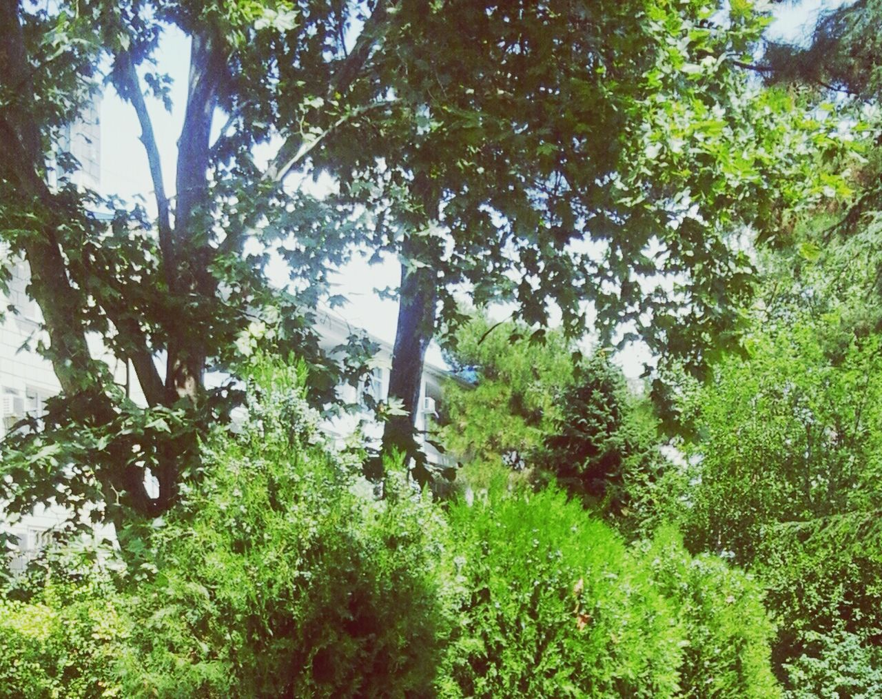 tree, growth, nature, green color, day, beauty in nature, tranquility, forest, no people, tranquil scene, outdoors, lush foliage, plant, scenics, leaf, branch