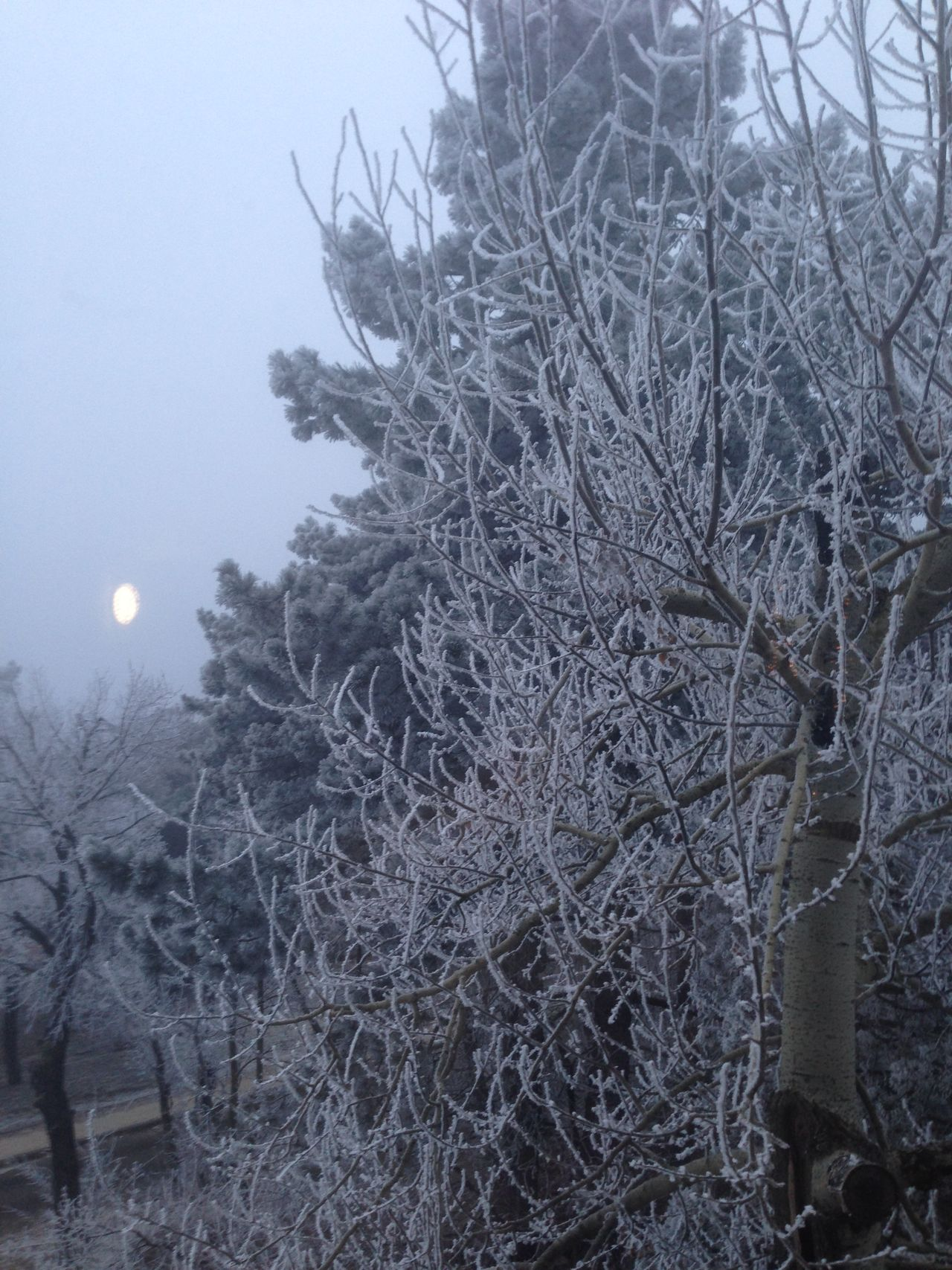 Bare Tree Beauty In Nature Moon Nature No People Sky Tree Winter
