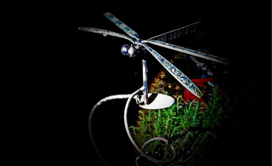 Things I Like Dragonfly💛 Sculpture Metal Art Colors Metal Structure Plants 🌱 Plants And Flowers Night Lights Metalsculpture Hello World Shadows & Lights Enjoing Life Bestshot EyeEm Gallery Darkness And Light Shadow Eyeem Best Shots When The Sun Goes Down..♥ Getting Inspired Eeyemphotos Creative Light And Shadow Eyeem Masterclass Colo EyeEm Best Shots - Landscape Tadaa Community Relax