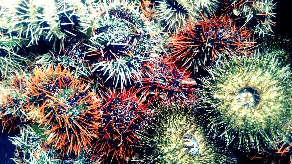 Food Seafood Foodporn Delicious Sea Creatures Swaki Sea Urchin Check This Out Cebu