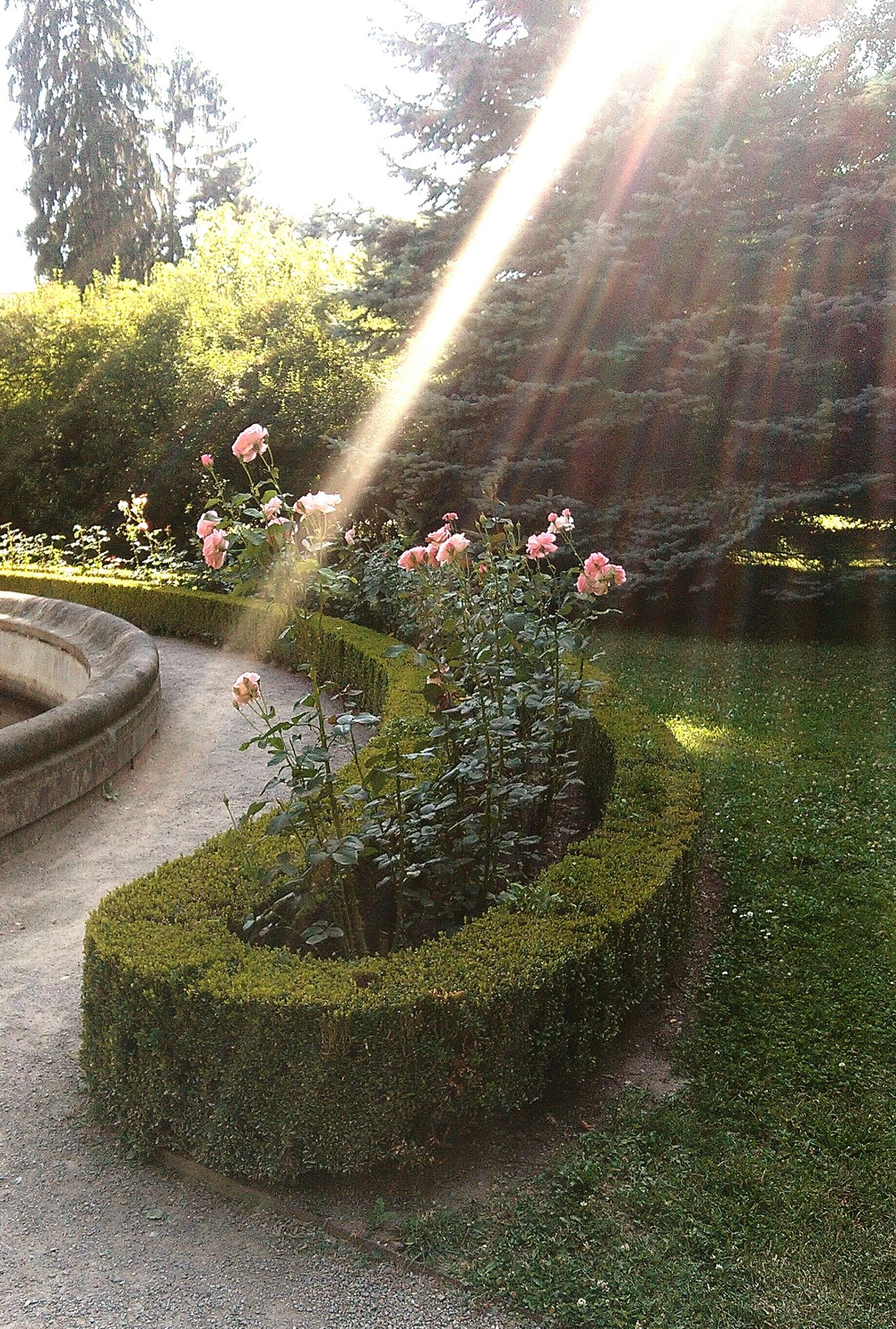 Garden Garden Flowers Garden Decor Garden Art Sunlight Sun Light Roses Rosas Rosario Rosarium Sun Lines Shine A Light Sunshine Sunny Day Castle Garden Rose Garden Sun Light Reflection Reflected Light Light Trails Light Sun Light Through Trees Plants Trees Greenery