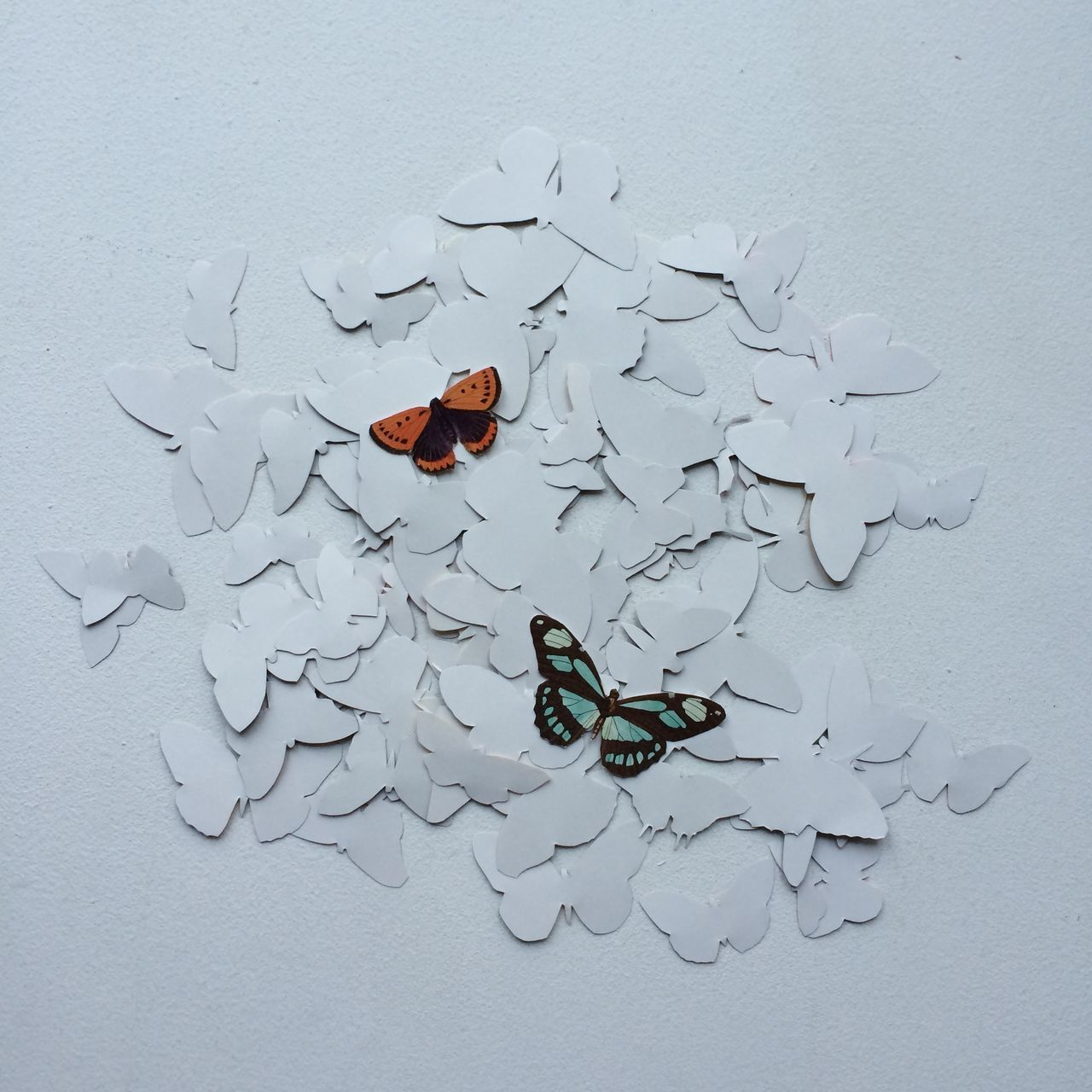 Beautiful stock photos of art, Animal Representation, Art And Craft, Butterfly, Creativity