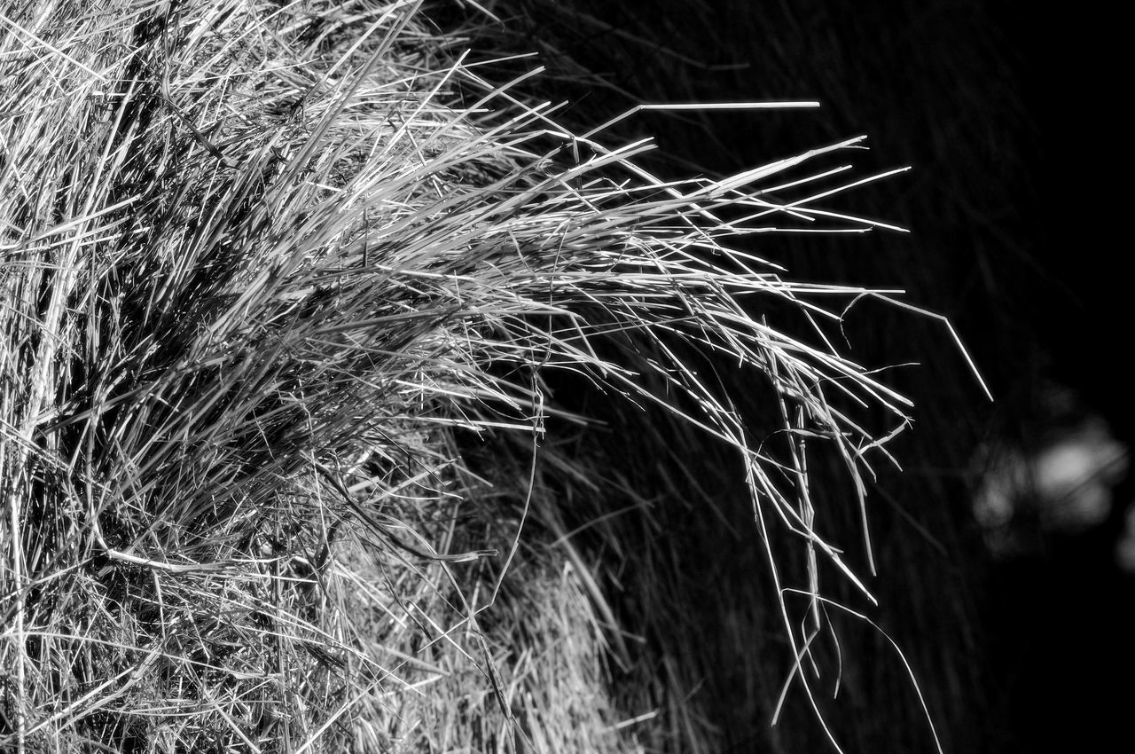 Beauty In Nature Blackandwhite Bottes Field Foin Grass Growth Nature