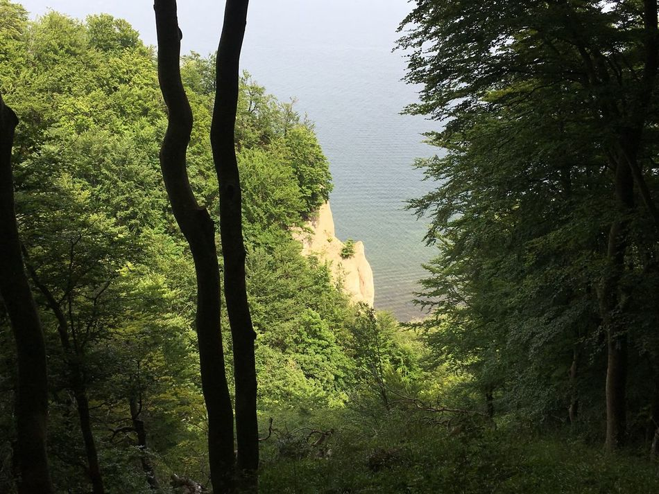 Tree Nature Tranquility Tranquil Scene Beauty In Nature Scenics Growth Green Color Outdoors Day No People Forest Water Landscape Branch Sky Møen Klints Denmark Cliff Cloud - Sky Sea High Angle View Tree Beauty In Nature
