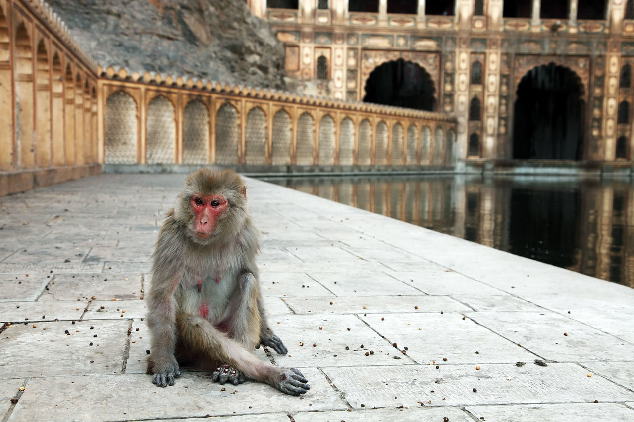 Beautiful stock photos of monkey,  Animal,  Animal Themes,  Arch,  Architecture