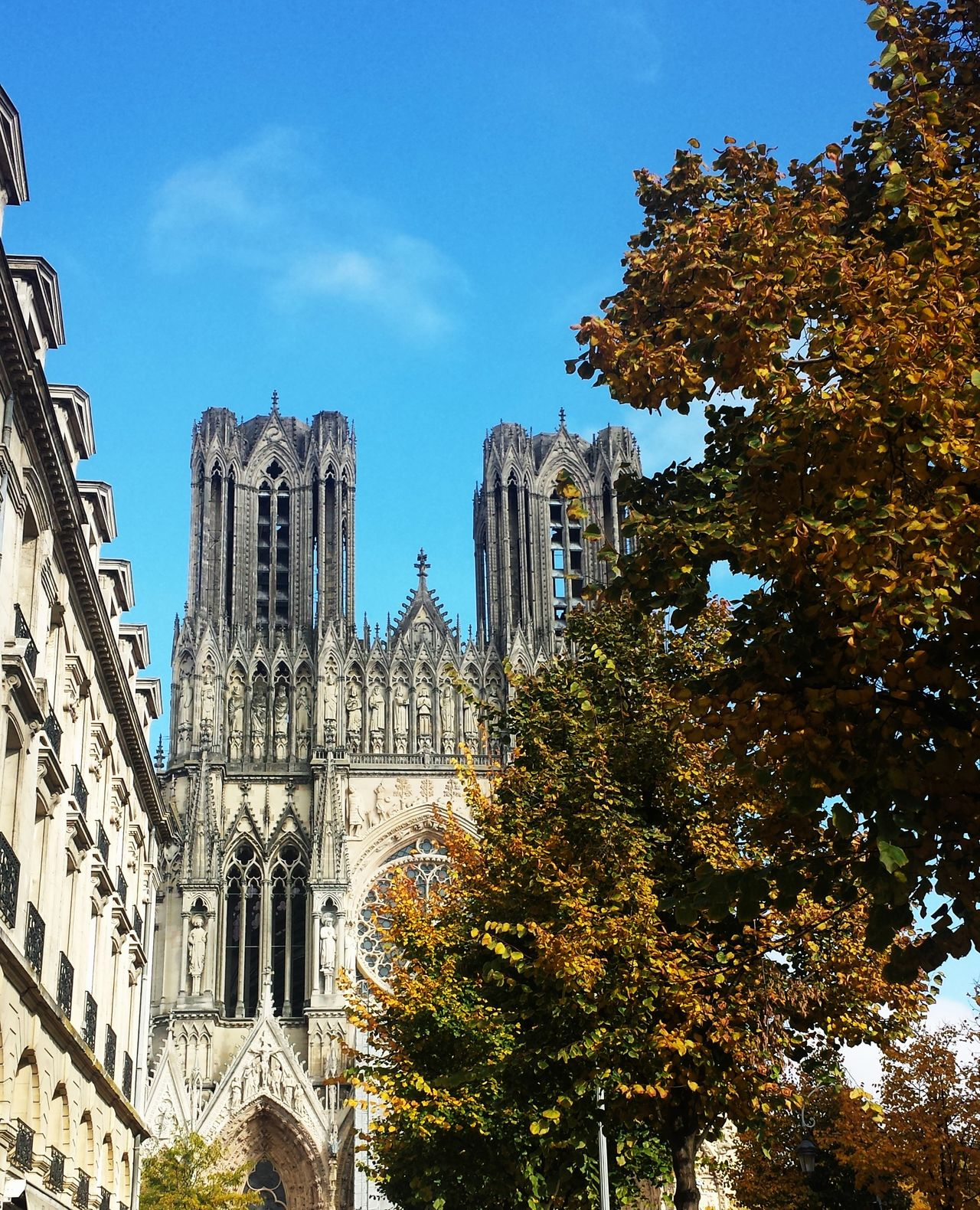 Architecture Architecture Automne Blue Sky Building Exterior Built Structure Cathedralenotredame City Day France Growth Low Angle View No People Outdoors Outdoors Photograpghy  Reims , France Reims Cathedral Sky Travel Destinations Tree