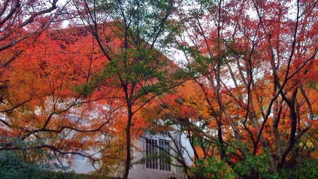 Autumn Leaves Autumn Colors Fall Beauty Colorful Fall Colors Autumn Garden Museum Kyoto Japan