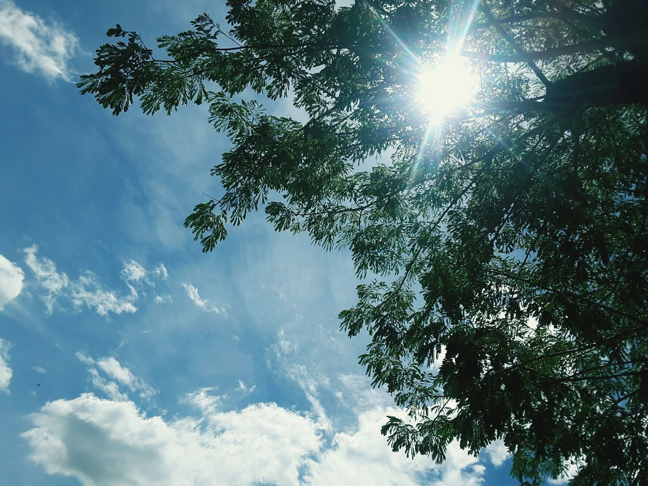 low angle view, tree, nature, sky, sunbeam, beauty in nature, sun, sunlight, no people, scenics, tranquility, day, cloud - sky, outdoors, tranquil scene, growth, branch, hope