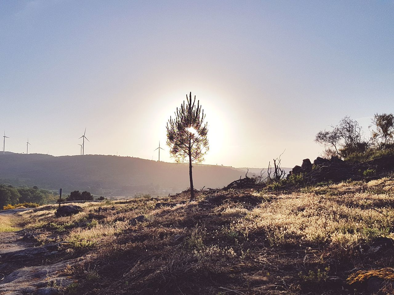 The Great Outdoors - 2017 EyeEm Awards Tree No People Outdoors Nature Sky Landscape Beauty In Nature Nature Vintage Retro Yellow Sunlight Beauty In Nature Backgrounds