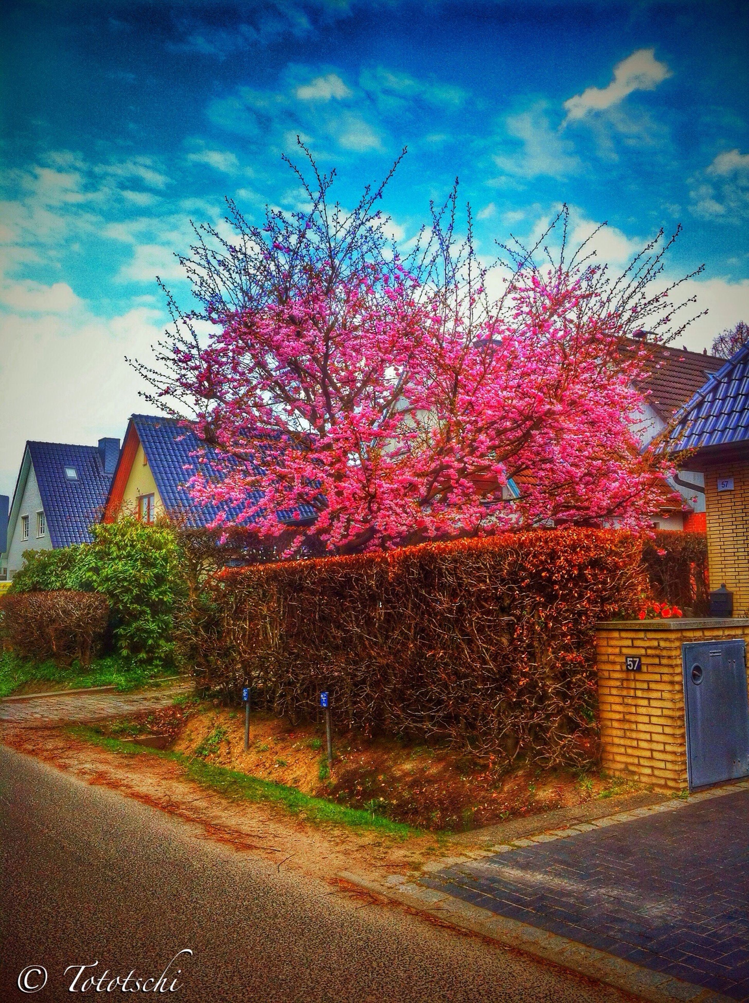 building exterior, sky, road, built structure, architecture, tree, street, pink color, transportation, the way forward, house, flower, outdoors, cloud - sky, road marking, city, no people, day, nature, diminishing perspective