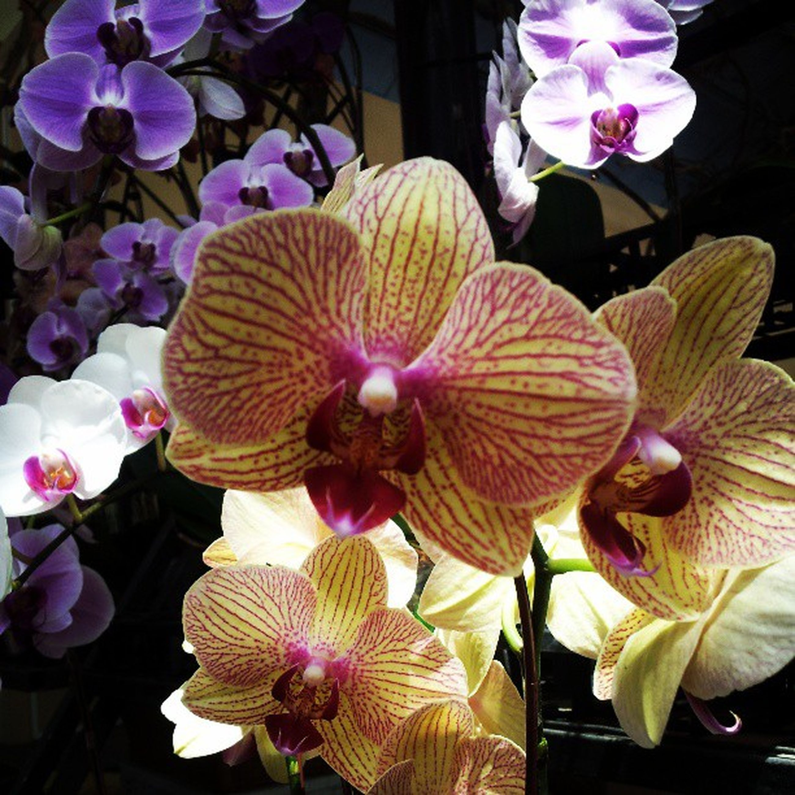 flower, petal, freshness, fragility, flower head, beauty in nature, growth, orchid, nature, blooming, indoors, close-up, purple, plant, high angle view, in bloom, pollen, no people, white color, stamen