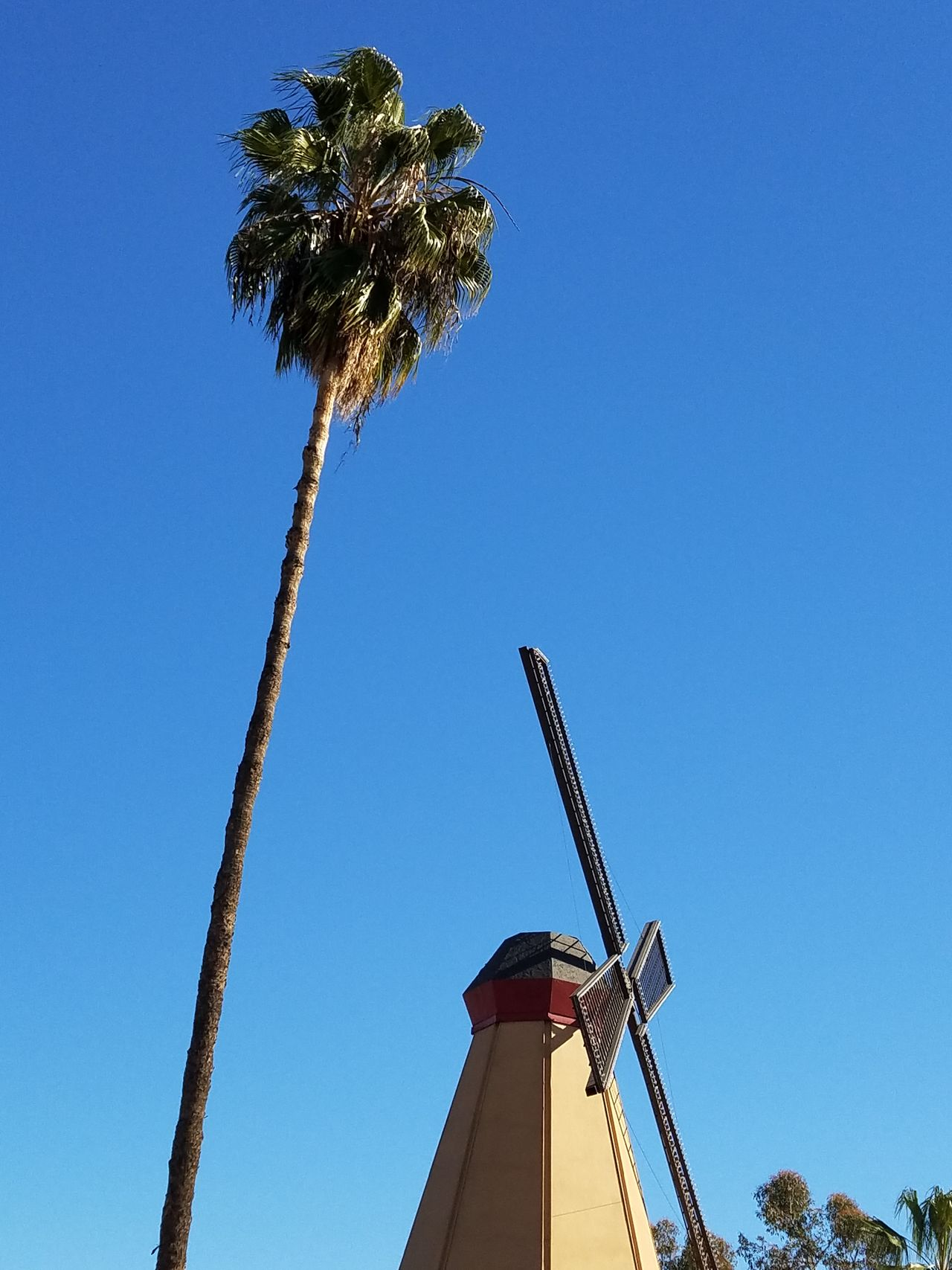 No Edit No Filters Blue Low Angle View Clear Sky Tree City Palm Tree No People Sky Day Outdoors Windmill Fine Art Photograhy Adapted To The City With Land Rover Copy Space Pattern, Texture, Shape And Form Backgrounds Street Photography Shadow And Light Nature Simplicity Still Life Photography Motion Minimalism Driving By And Captured Out Window