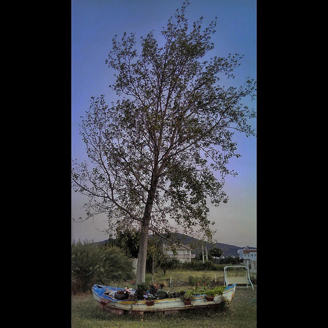 tree, sky, outdoors, table, day, nature, no people, bare tree, nautical vessel, water, beauty in nature, clear sky