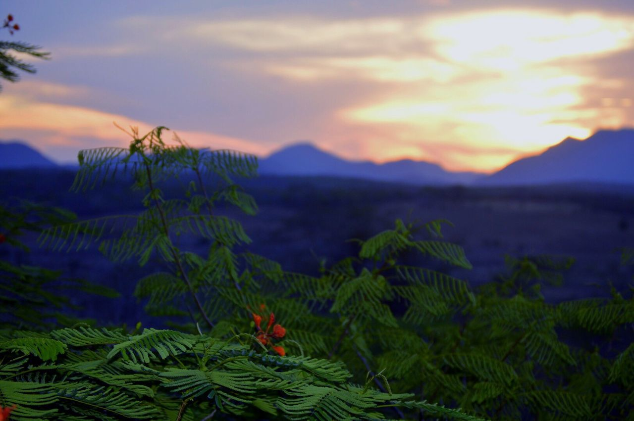 Beauty In Nature Nature Flower Plant Growth Mountain Sunset Sky Scenics Tranquil Scene Tranquility Outdoors No People Landscape Freshness Close-up Flower Head Day