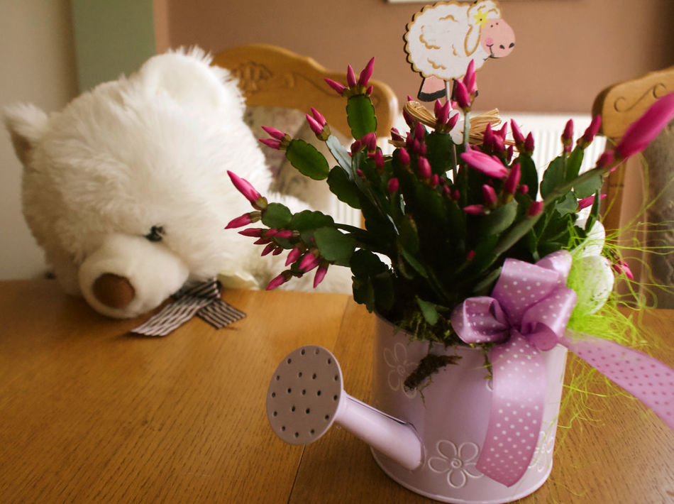 Easther is coming soon. Chenille Close-up Easther Flower Freshness Harmony Home Interior Indoors  Nature No People One Animal Plush Bear Plush Toy Purple Purple Flowers Tranquility Watering Can Watering Pot Spring Spring Flowers Aesthetic EyeEmNewHere Lieblingsteil Stuffed Toy Spring Is Coming