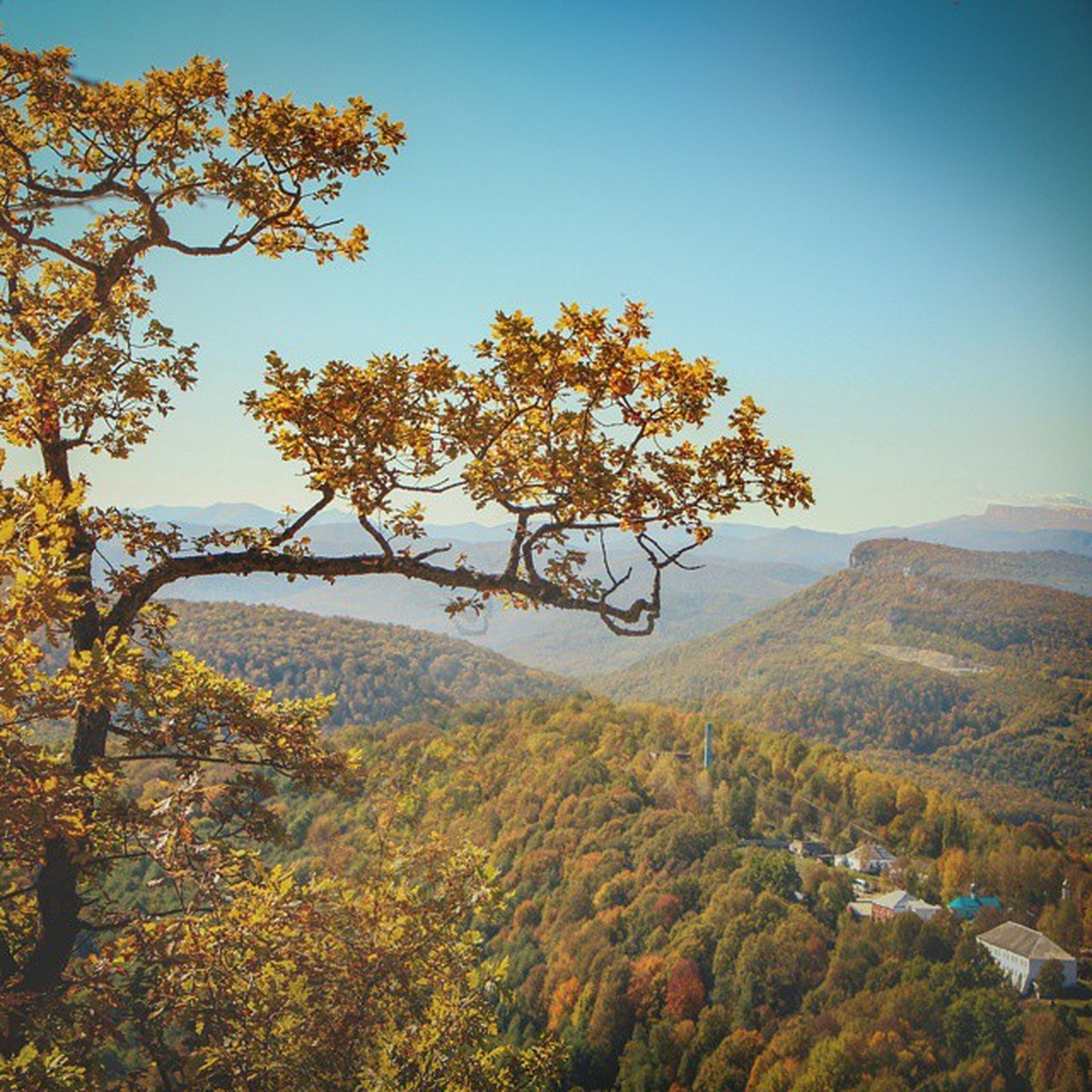 tree, clear sky, tranquility, tranquil scene, beauty in nature, growth, scenics, nature, mountain, landscape, branch, autumn, copy space, non-urban scene, sky, change, sunlight, day, no people, idyllic