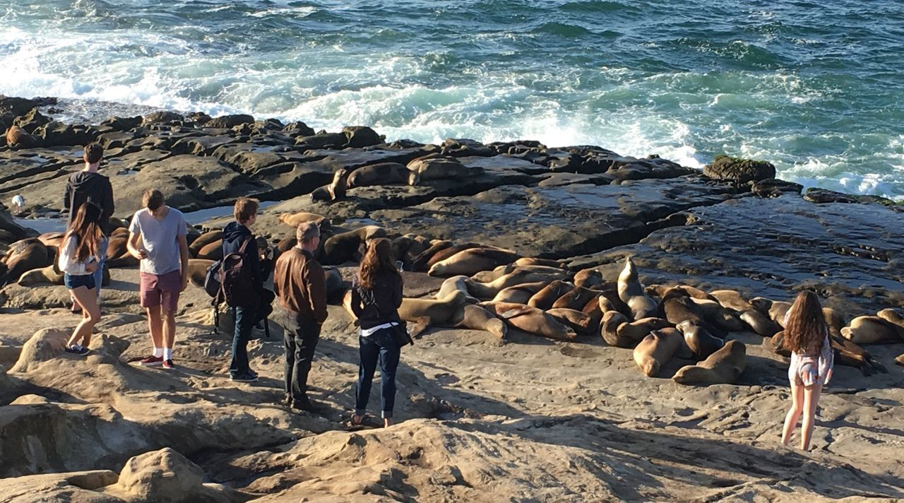 Sea Rock - Object Beach Wave Standing Nature Men Day Adult Outdoors People Women Water Large Group Of Animals Full Length Mammal Beauty In Nature Adults Only One Person The Watchers Seals On The Sea Shore Seals On Beach Seals
