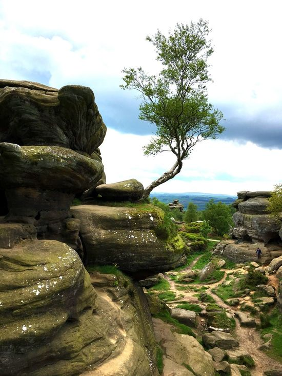 Brimham Rocks EyeEm Gallery Vitamin D Is Free YorkshireTranquility Nature Rock Formation Eroded Beauty In Nature History Rock - Object Non-urban Scene Ancient Tourism Perfect Day Love Summer Solitude Yorkshires Beauty Nature Is Awesome Tree