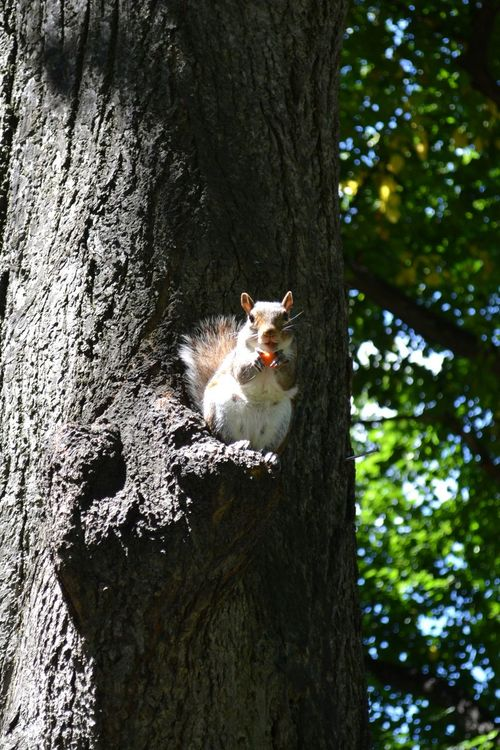 Happy squirrel Squirrel Animal Animals Happy Park Tree Food Eating Animal Lovers Scoiattolo Animali Parco No Filter The Purist (no Edit, No Filter) Nature's Diversities Original Experiences